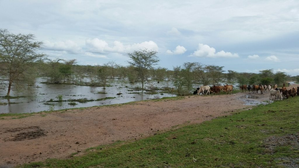 Floods at Bridge